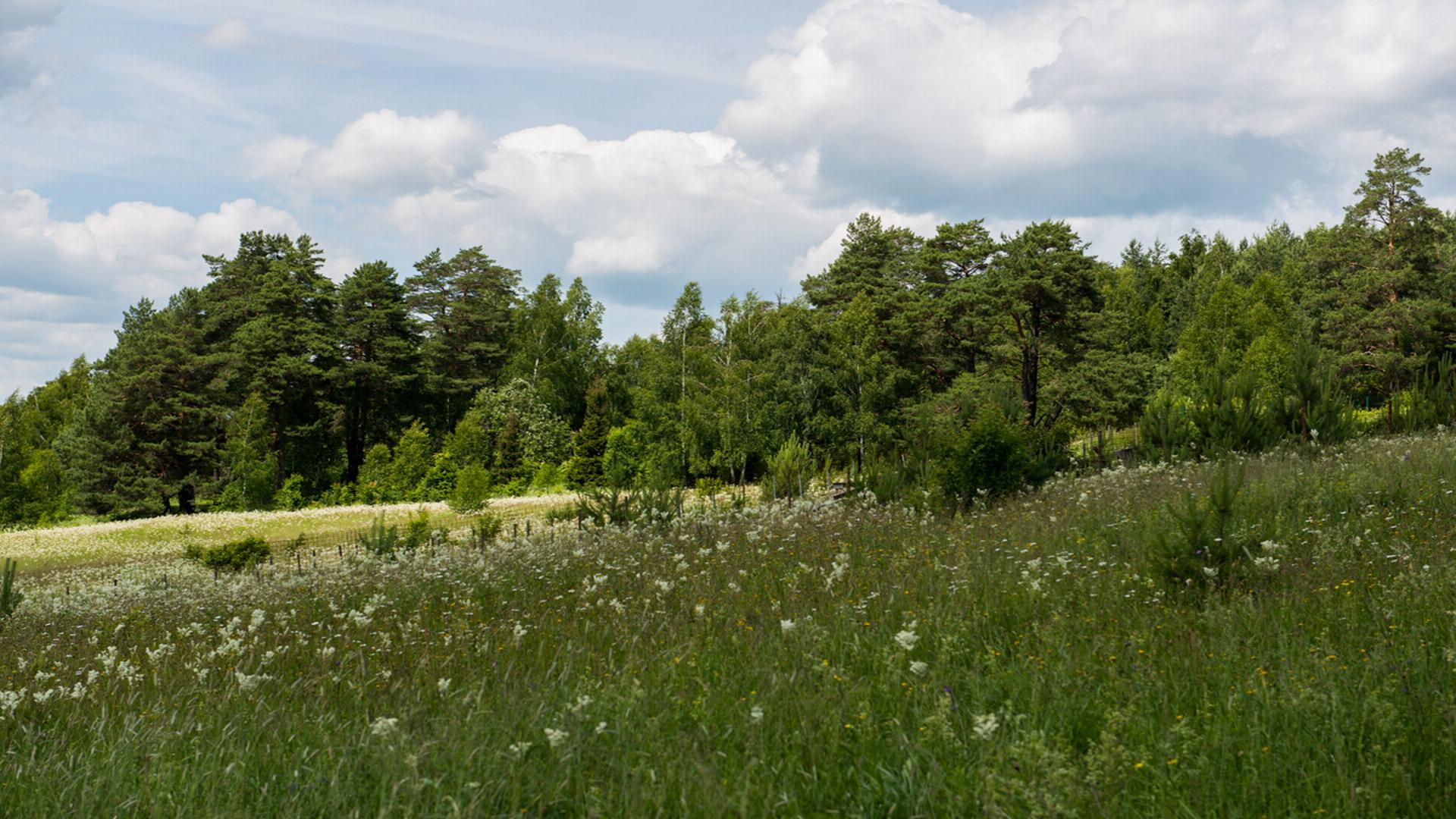Участки в деревне Наткино
